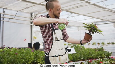A young gardener takes care of a flowering garden in its greenhouse. A man in an apron with water sprinkles flowers.