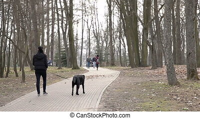 A young girl is walking in the park in the spring with a black dog