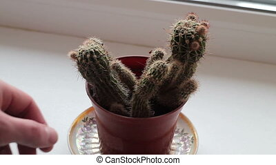a young man touches a cactus, ouch,it hurts!!!