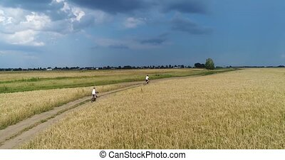 A young man with a child riding bicycles on a country road along the wheat fields. Shooting from a drone. Sports outdoors