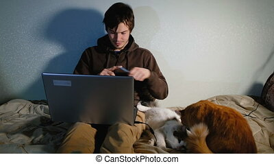 A young man working at a computer at home, sitting on the bed with the cats, the cats bask and play.