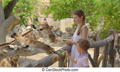 A young woman and her little son feed giraffes in a safari ...