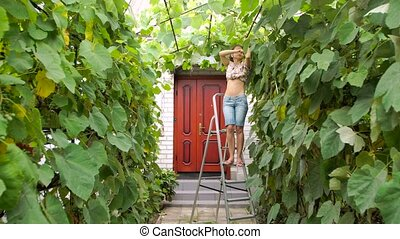 woman caring for grapes - a young woman caring for grapes in...
