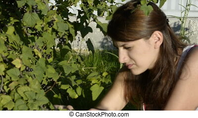 A young woman gathers berries