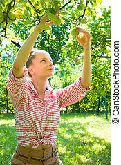 A young woman harvesting organic Apples in her garden