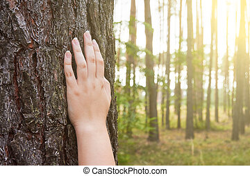 A young woman holds her hand on the trunk of a tree in the forest with sunlight