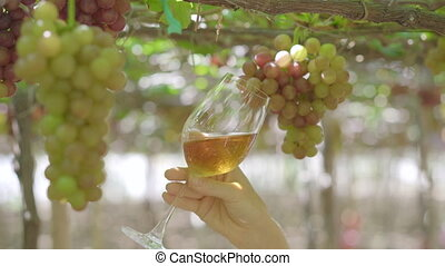 A young woman is drinking wine from a glass on a wine-producing farm. Eco farming concept. Ecotourism concept.