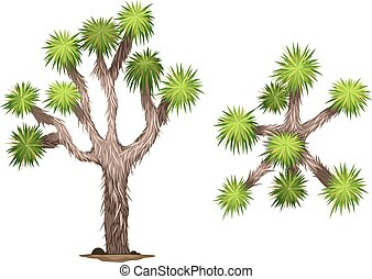 A Yucca brevifolia plant on a white background