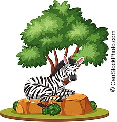 A zebra in nature isolated