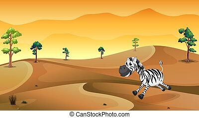 A zebra in the desert