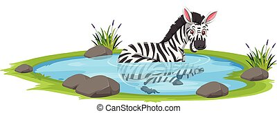 A zebra in the pond