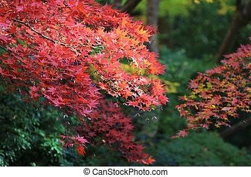 zen garden at fall season at japan at Rurikoin - a zen ...