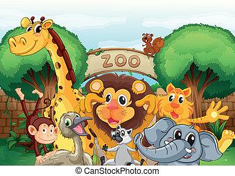 a, zoo, och, den, djuren