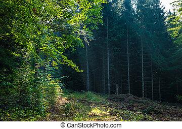 aalen, romanticos, floresta