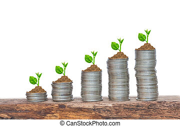 aambeien, opeenvolging, muntjes, bomen, groeiende, germination