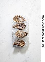 aangeboden, verpletterde, space., rauwe, ijs, achtergrond, fris, witte , kopie, oesters, marmer