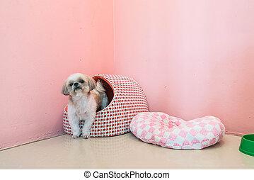 aanhalen, dog, bed