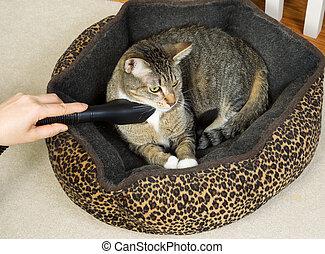 aanhalen, kat, poetsen, bed