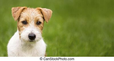 aanhalen, spandoek, dog, vrolijke