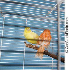 aanhalen, vogels