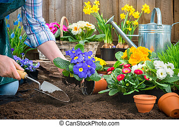 aanplant, bloemen, tuinman
