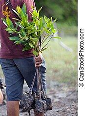 aanplant, man, boompje, nieuw
