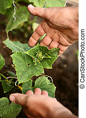 aanplant, plant, soil., twee handen