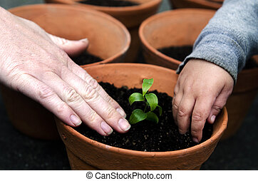 aanplant, plant