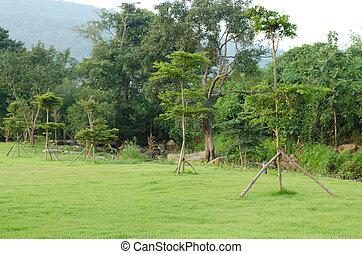 aanplant, tuin, bomen