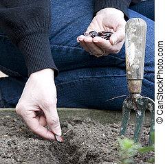 aanplant, zaad