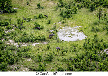aanzicht, luchtopnames, elephants., kudde