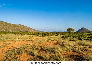 aanzicht, van, de, savanne, van, samburu, park