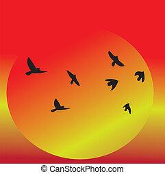 aanzicht, vliegen, ondergaande zon , vogels, &