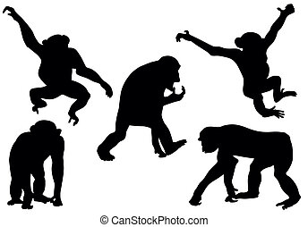 aap, silhouettes, verzameling