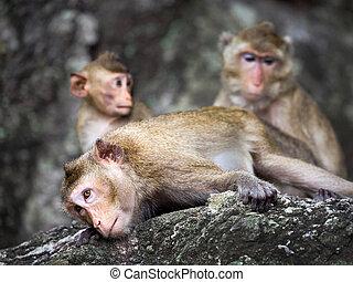 aapjes, gezin, wild.