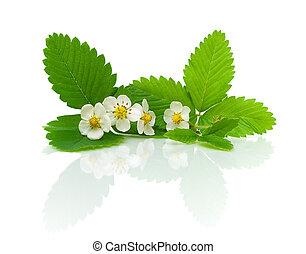 aardbei, bladeren, bloemen, witte achtergrond