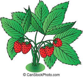 aardbei, bladeren, rood