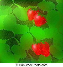 aardbei, rood