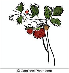 aardbei, spotprent, rood