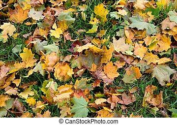 aautumn, feuilles