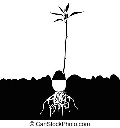 abacate, plant-tree