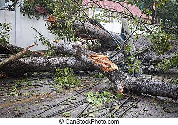 abajo, árbol, daño, viento