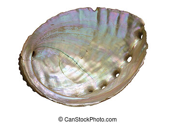 Abalone Shell Inside - abalone shell pearly inside isolated...
