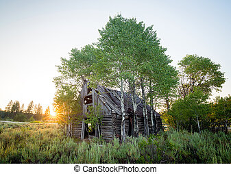 Abandon log cabin that has been overgrown with trees