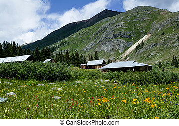 abandon mining town in wildflowers - gold and blue...