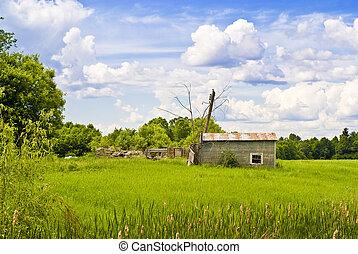 abandonado, cabana, em, um, campo