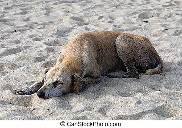 Abandoned - an injured dog abandoned at the beach