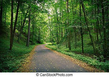 Abandoned asphalt road in a deep green forest