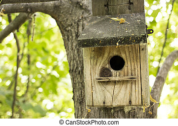 abandoned bird house in the woods