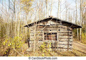 abandoned cabin in the fall